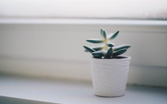 blur-cactus-plant-close-up-754177